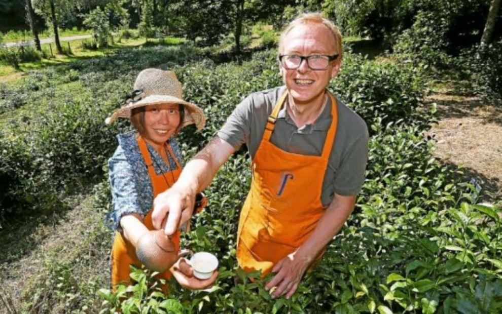 TEA IN BRITTANY, A PROMISING CULTURE