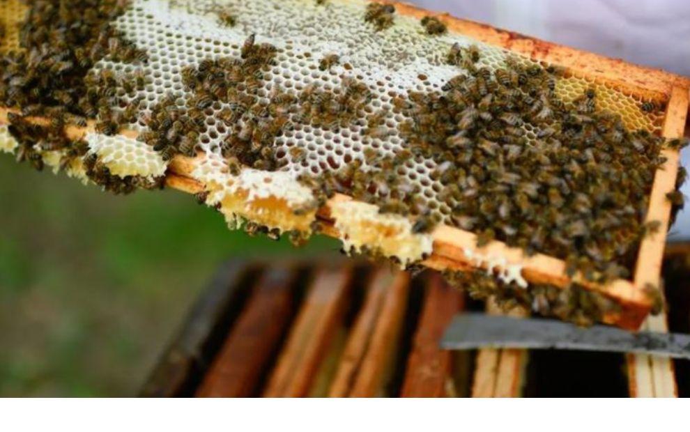 Vol de ruches : le phénomène prend de l'ampleur entre apiculteurs