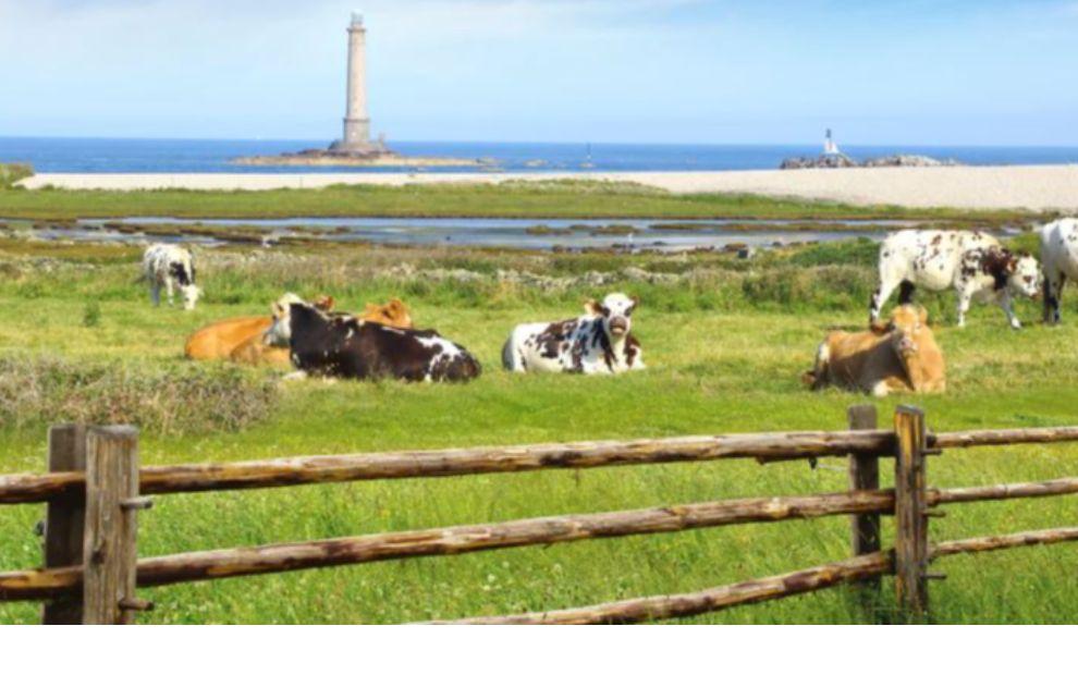 Agriculture. Le PSN offrira-t-il à l'élevage l'occasion d'être rentable ?
