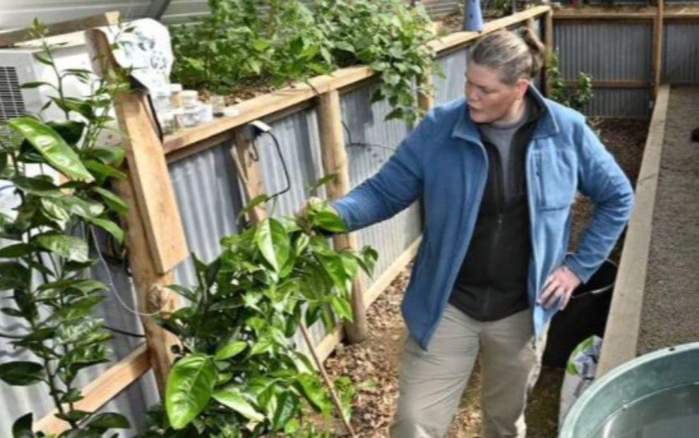 Grâce à sa serre semi-enterrée, il cultive « fruits et légumes en toutes saisons »