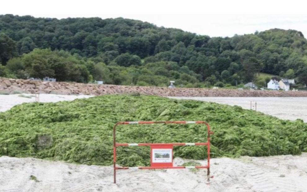 Algues vertes en Bretagne. L'État va proposer des « contrats » aux agriculteurs