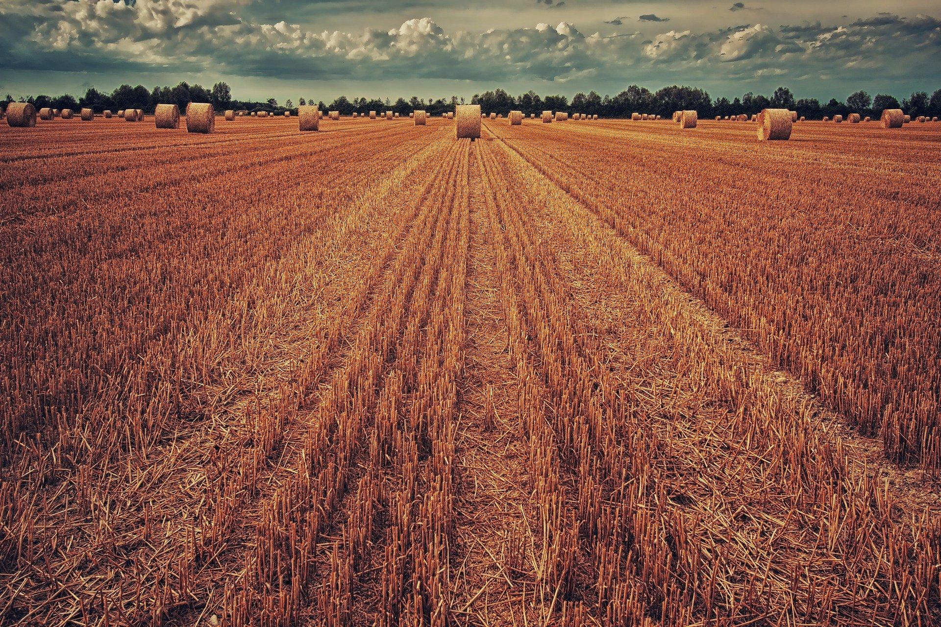 Le monde agricole secoué par la flambée des engrais azotés